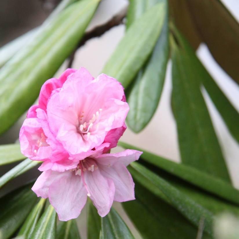 花リレー01