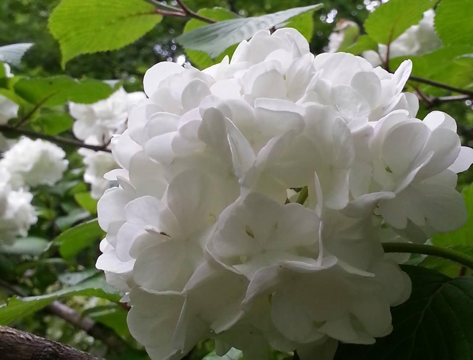 花リレー02.jpg